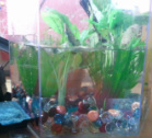 Your betta day one betta splendid for Can you use distilled water for betta fish